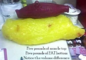 muscle versus fat